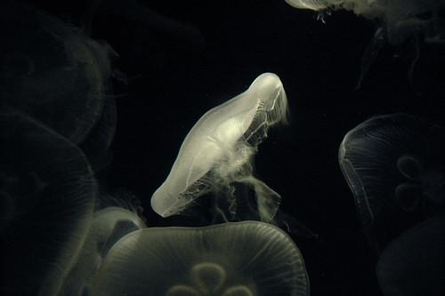 Jellyfish 1 - eqqman