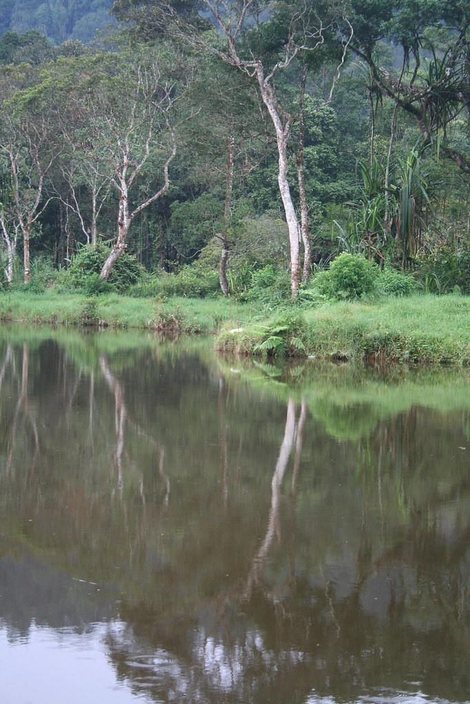 hutan situ gunung