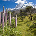 Wildflowers of Huascaran Park por Marc Shandro