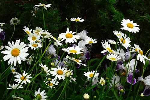 flower temperment