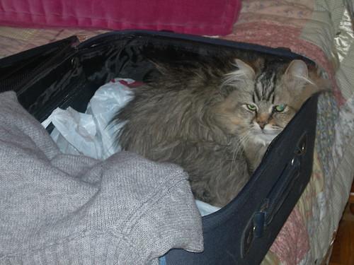 Mi gato Silbo se prepara para las vacaciones