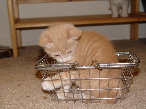 Rocket sitting in a basket.