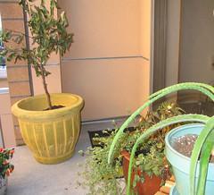 My start of a balcony garden
