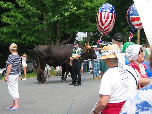 The Oxen