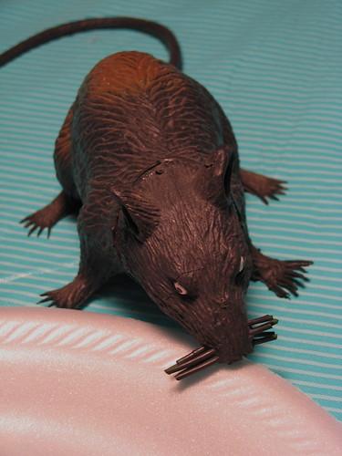 Ahh! Rat!