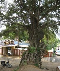 Hillbase Ellaiamman temple