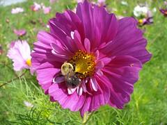 2007-08-19 Sonnenberg Gardens DSC01783