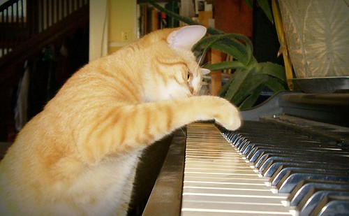 Piano lessons cat