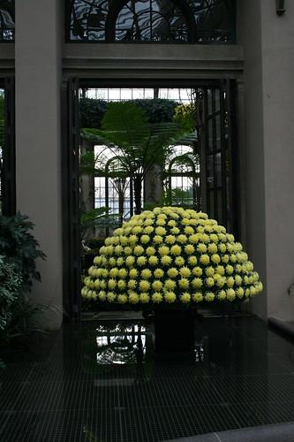 Yellow Mum mushroom