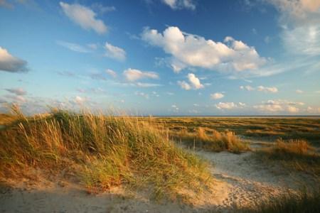 Costa de Fanø salpicada de ammophila sobre la arena