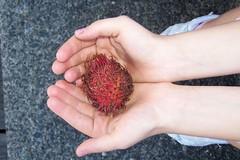 Hairy Fruit