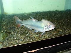 2006oct 058