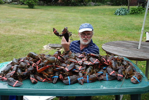 53 Lobsters for July 4th Cookout at Peter Donahue's Mother's House