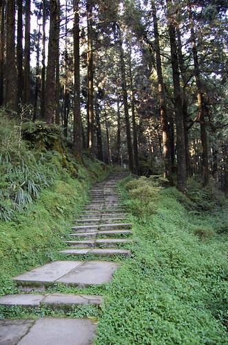 Alishan - Path