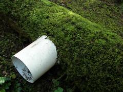 LTER: Log Decomposition Site