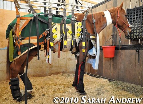 Zodiac at Days End Farm Horse Rescue
