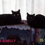 BEANIE & NELLY