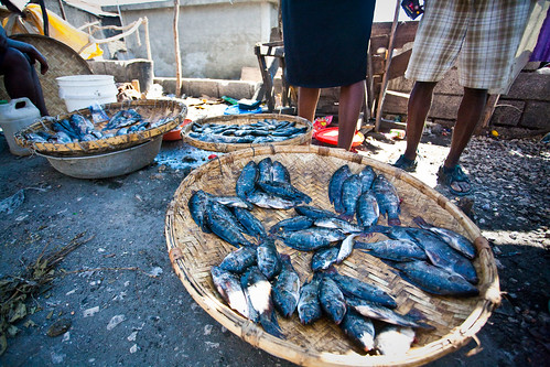 Fish-for-Sale