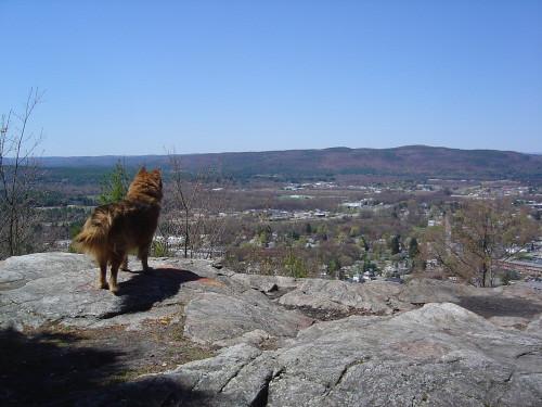 Reggie atop Beech Hill