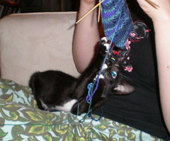 sock kitten ii