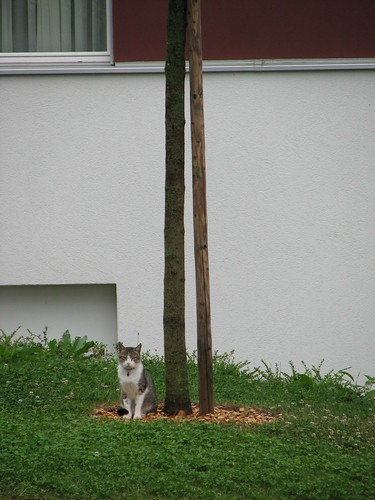 Bagha arbre 1