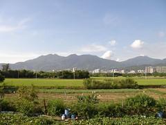 28.關渡平原的稻田與大屯山系 (3)