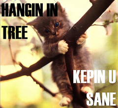 Hang in there LOLcat!