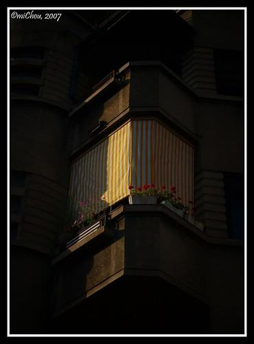Flowers in my window
