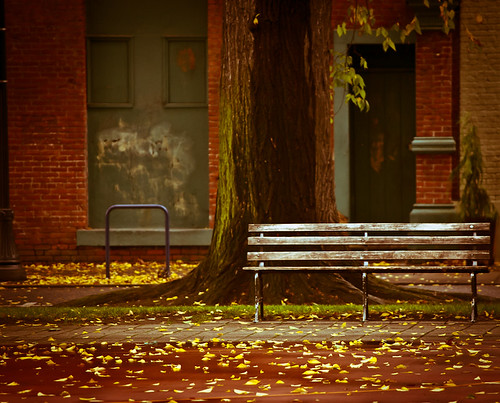 Cold Fall Bench