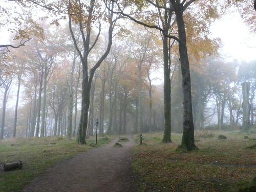 Wheata Wood