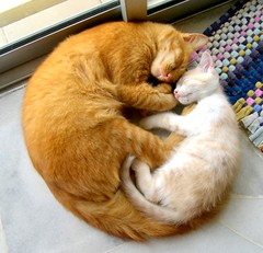 The Cat-Circle of Love