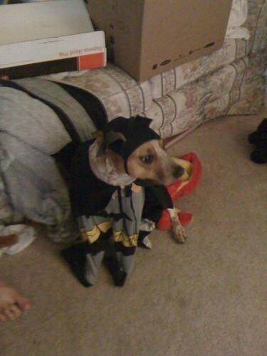 peanuttiest dog named after a batman villain masquerading as a batman
