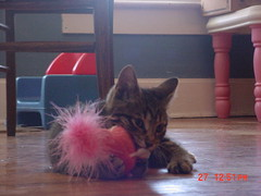 Beesly with pink mouse