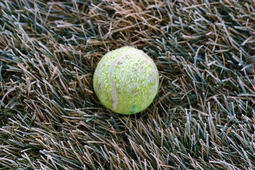 Tennis Ball on Frosted Lawn
