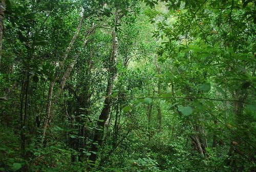 La Verde Isla Bonita