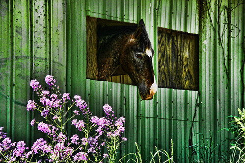 Horses Like Flowers Too