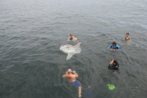More swimmers with the sunfish