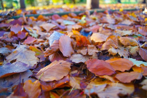 Leaves scattered on the ground!