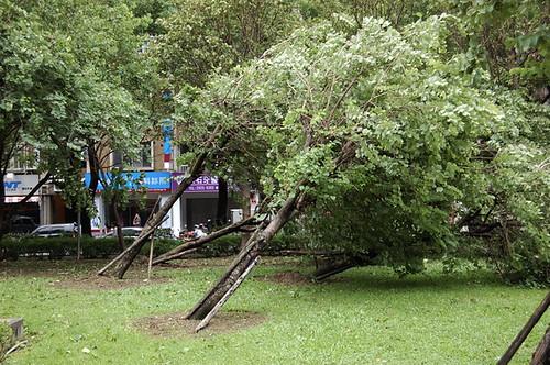 Typhoon Sepat