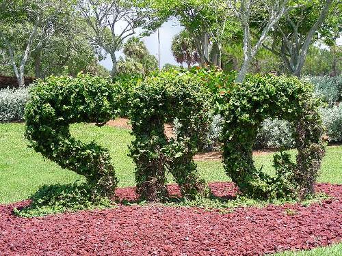 SRQ topiary