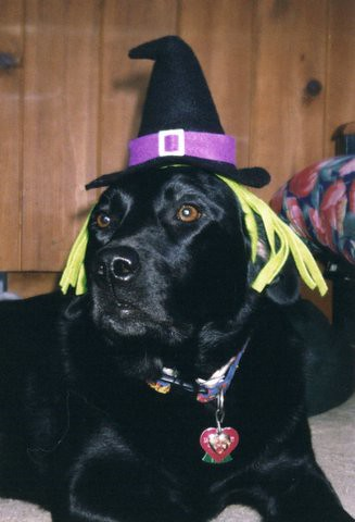 Witchy-Poo