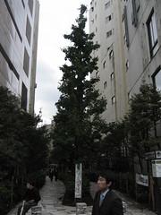 Shinjuku entre imeubles