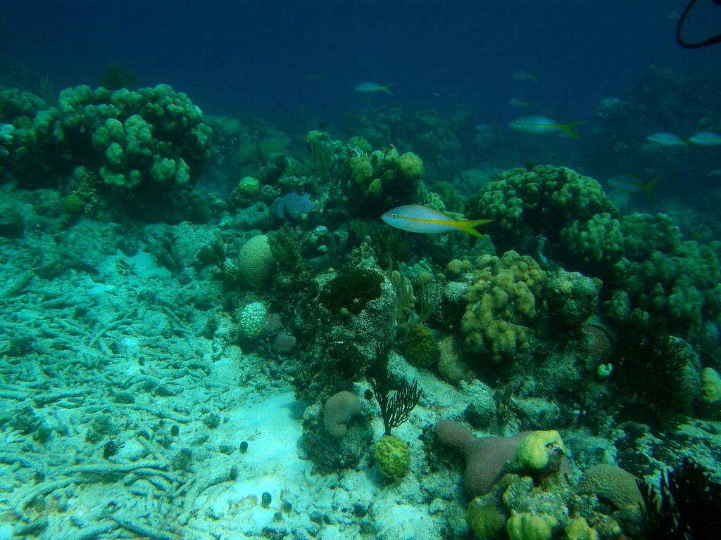 Arrecife de coral en Bah�a de Cochinos