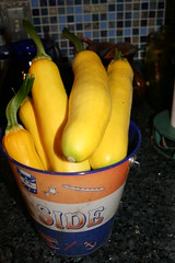 Bucket of yellow squash from the garden