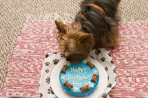 菲菲和牠的生日蛋糕