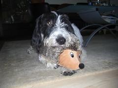 Nemo und sein neuer Igel