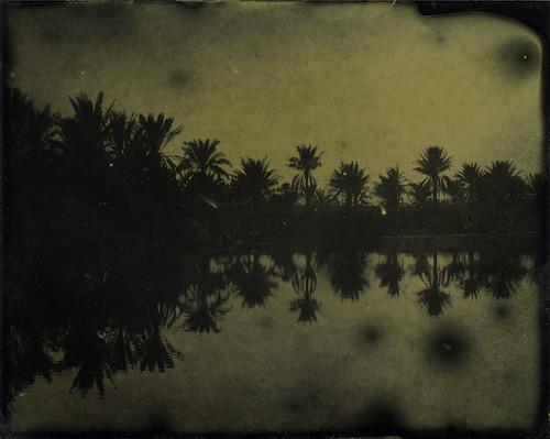 Palms - Ferrotype