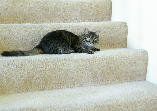 IMGP5893 Stair Cat