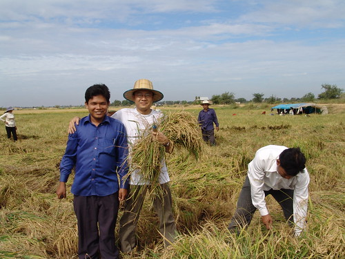 Cambodia PWDs Selfhelp Group Havest Rice in Kandal Province, Cambodia