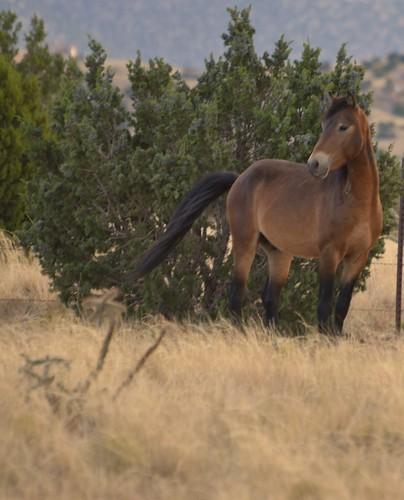 NM Wild Horses nwm (27)